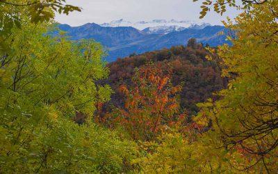 Agritech Bigdata al capdavant de la base de dades d'ecosistemes forestals més gran del món