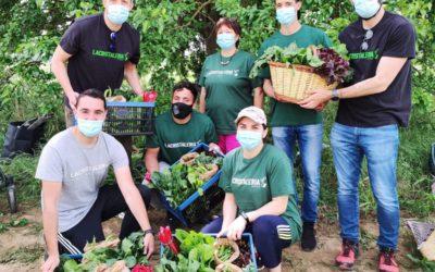 'La Cristaleria Germina' ofereix cistelles d'hortalisses ecològiques d'un projecte agrosocial